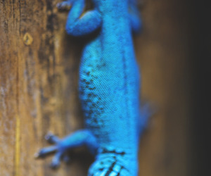 animals, gecko, and reptiles image