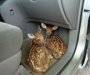 deer, animal, and car image