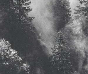 wallpaper, trees, and lockscreen image