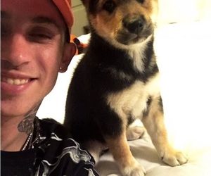 puppies, SC, and blackbear image