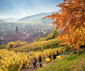 autumn, fall, and france image