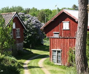 farm, old, and summer image