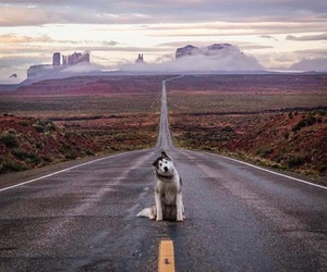 dog, travel, and puppy image