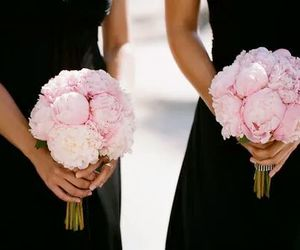 flower, pink roses, and whait image