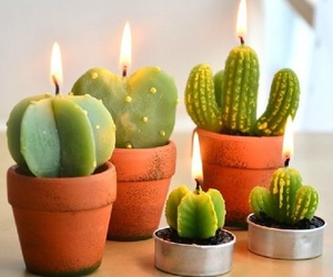 cactus, instagram, and candles image