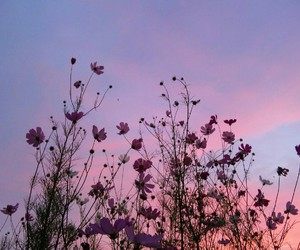 field, flowers, and sky image