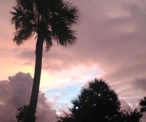 beach, florida, and palm tree image