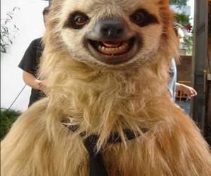 animal, smile, and sloth image