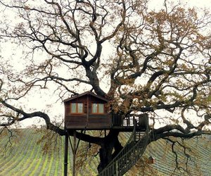 house, tree, and casa del arbol image