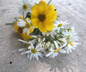 flower, white, and nice image