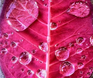 leaves, pink, and drops image