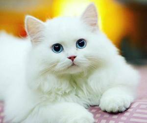 kitty, cats, and animals image