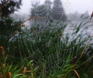 beautiful, spider web, and nature image