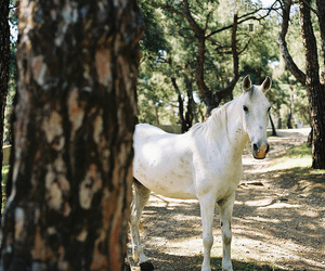 horse, tree, and nature image