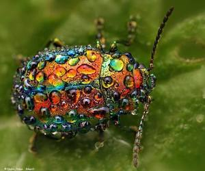 beetle, colourful, and insects image