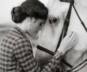 horse and black and white image
