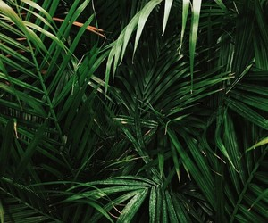 boho, indie, and plants image