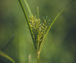 fine art photography, nature, and weeds image