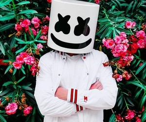 marshmello and flowers image
