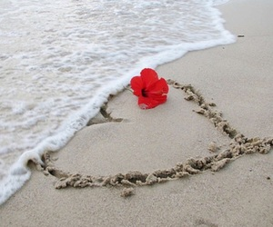 beach, ocean, and red flower image