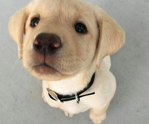 dog, pet, and cute image
