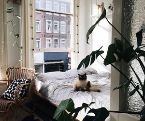 animals, bed, and room image
