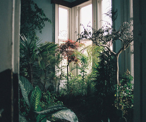 plants, indie, and nature image