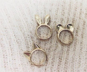 rings, cat, and ring image