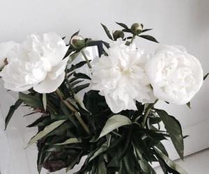 beautiful, nice, and white image