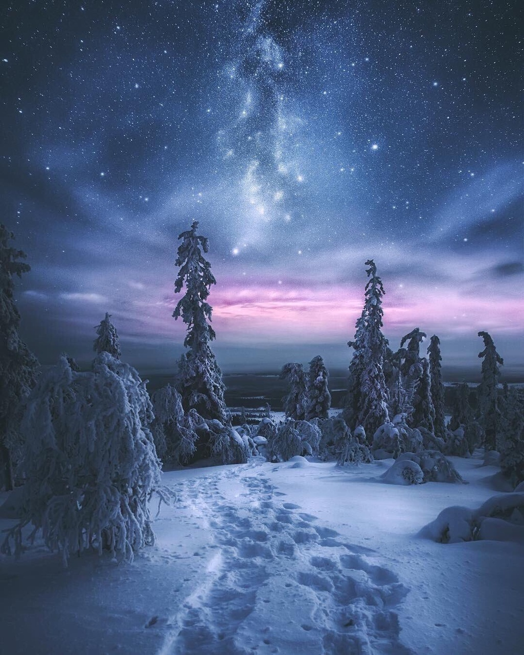 blue, forest, and northern lights image