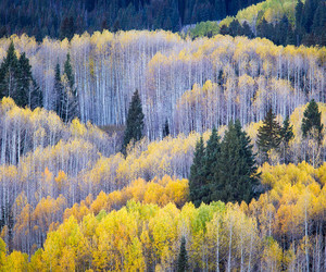 abstract, autumn, and colorado image