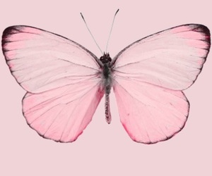 background, girly, and butterfly image