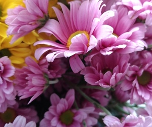 flowers, pink, and wallpapers image