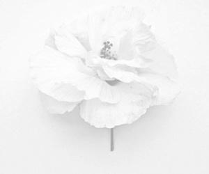 aesthetic, flower, and minimalistic image