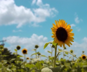 blue, flowers, and girasol image