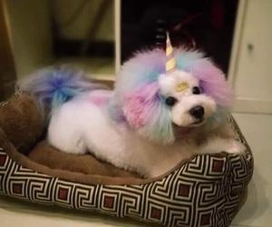 dog, unicorn, and cute image