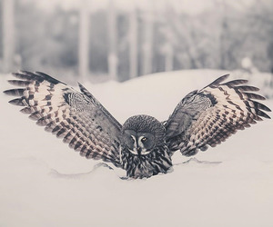 animal, nature, and owls image