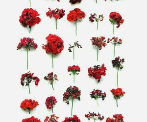 flowers, red, and pretty image