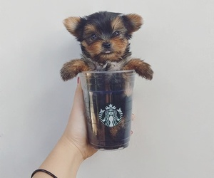 bear, dog, and puppy image