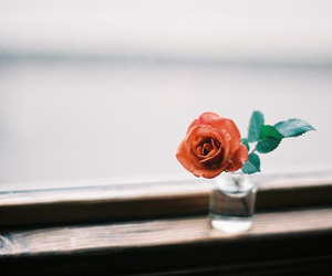 beautiful, hipster, and rose image
