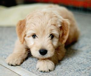amazing, baby dog, and beauty image
