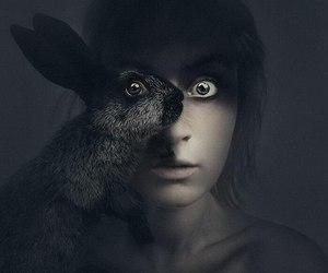 rabbit, animal, and photo image