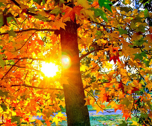 autumn, colors, and sun image