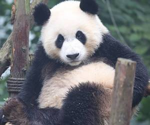 kawaii, cute, and panda image