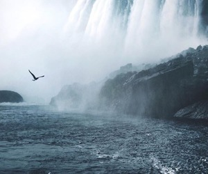waterfall, bird, and travel image