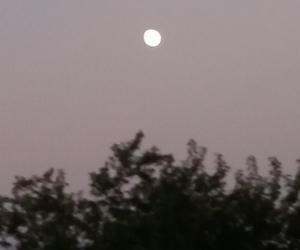 dark, moon, and tree image