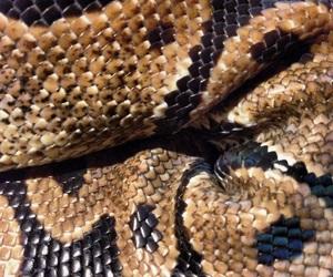 snake and theme image