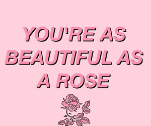 quotes, pink, and rose image