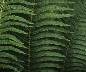 fern, plants, and green image