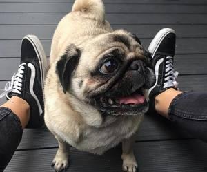 animals and dog image